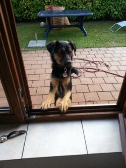 Ferienhaus mit Hund in De Haan